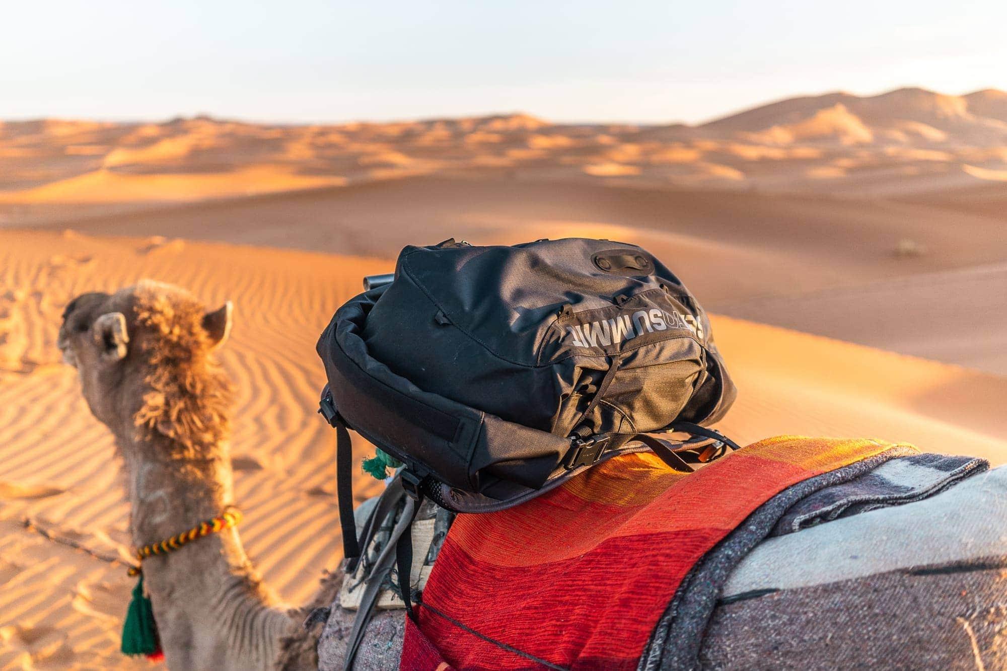 Morocco-camel-sahara-desert-sea-to-summit